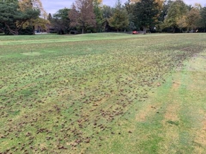 Punched Fairway